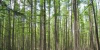 山西经济日报:绿水青山就是金山银山 - 林业厅